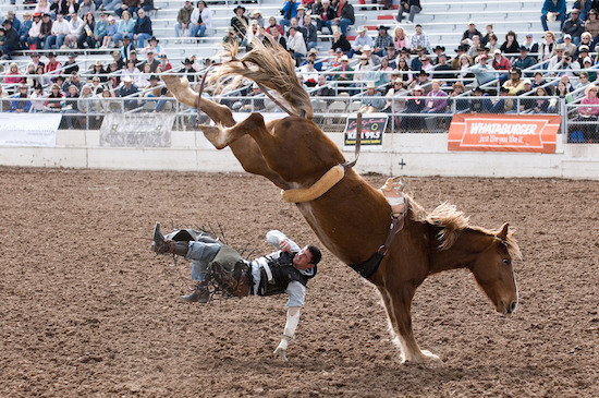 This ain't your first rodeo - now you can handle a security breach like a pro!